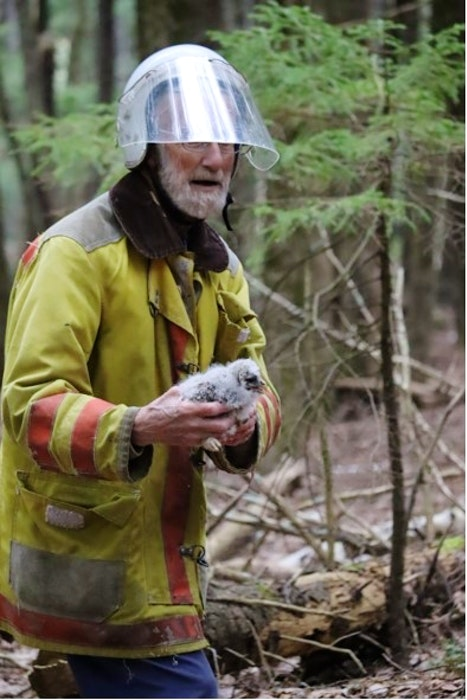 Bernard Forsythe, who has a permit to band baby owls, knew how to help the owlets that had fallen out of a nest. - Contributed