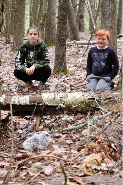 Young explorers recently discovered some owlets that had fallen out of a nest in the Annapolis Valley. - Contributed