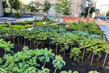 This Desjardins office building in Toronto has a garden that includes kale, onions and herbs.