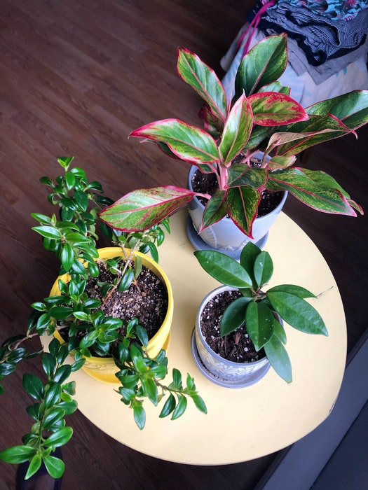 Some of the plants Diane Collins has welcomed into her home since the pandemic began.  - Contributed
