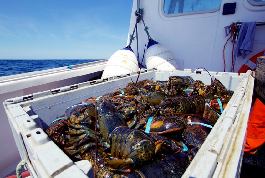 Lobster is the most valuable seafood produced by Atlantic Canada. According to Statistics Canada, Nova Scotia's live lobster exports in 2020 were about $800 million and the export value of frozen in shell lobster from the Atlantic provinces was about the same.