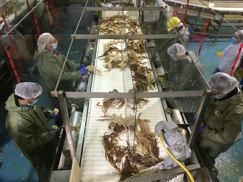 A crab butchering line at the Ocean Choice International plant in Triton, N.L.  CONTRIBUTED PHOTO  - Contributed
