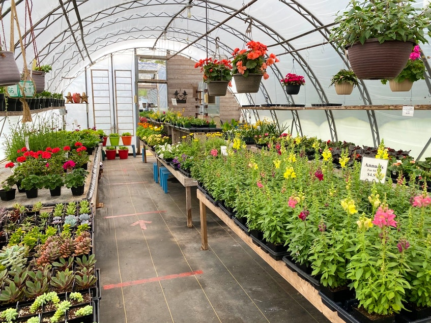 Greenhouses have been chock full but are selling steadily during COVID days. CARLA ALLEN • TRICOUNTY VANGUARD - Carla Allen