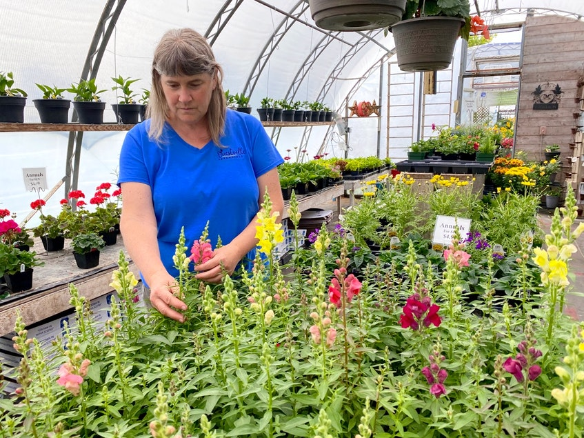 Alice d'Entremont in one of her greenhouses. There's always grooming, watering and fertilizing to do. CARLA ALLEN • TRICOUNTY VANGUARD - Carla Allen