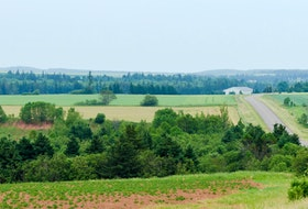 Forests and fields line a Prince Edward Island highway. The writers argue that not all factors such as quality of life and biodiversity are taken into consideration when planning developments.