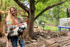 Karen Hearn with her rooster in her backyard in Mulgrave. She will be voting to allow for poultry and other farm animals in town at a pleblicite being held by the municipality on Monday.