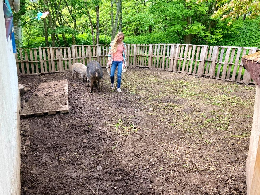 Karen Hearn with the two Berkshire pigs that she is raising for meat in the Town of Mulgrave. - Aaron Beswick