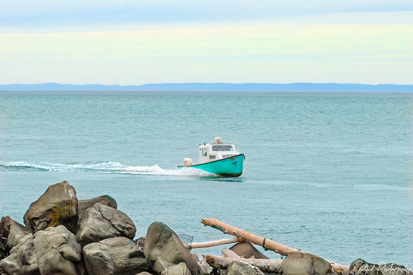 David Taylor cruises on the Bay of Fundy in The Mermaid. – Geralyn Howell - Contributed