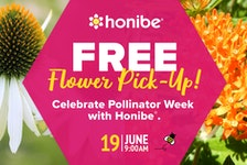 Honibe hosts a free flower giveaway in Charlottetown