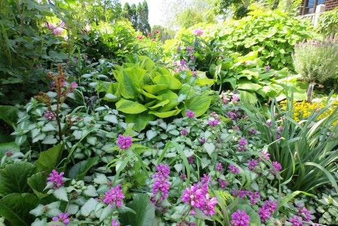 Lamium provides great groundcover where nothing else will grow.