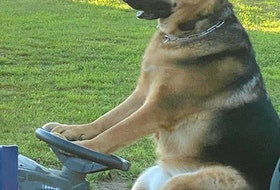 Nothing says summer like sitting on the lawn tractor getting ready to cut the grass on a warm day. I guess it adds new meaning to the 'Dog Days of Summer'. Tracy Denton-McBride of Digby snapped this photo of her dog, Buddy McBride, perched in the driver's seat of the lawn tractor.