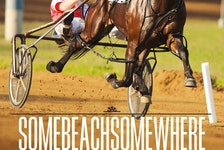 Author Marjorie Simmins' latest book covers the life of harness racing legend Somebeachsomewhere. Contributed