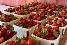 Fresh strawberries from Prime's Marshalltown Market.