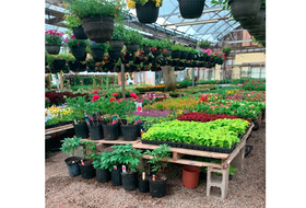 A variety of colourful flowers, hanging baskets, trees and shrubs are available at Gray's Greenhouses in Addington Forks.