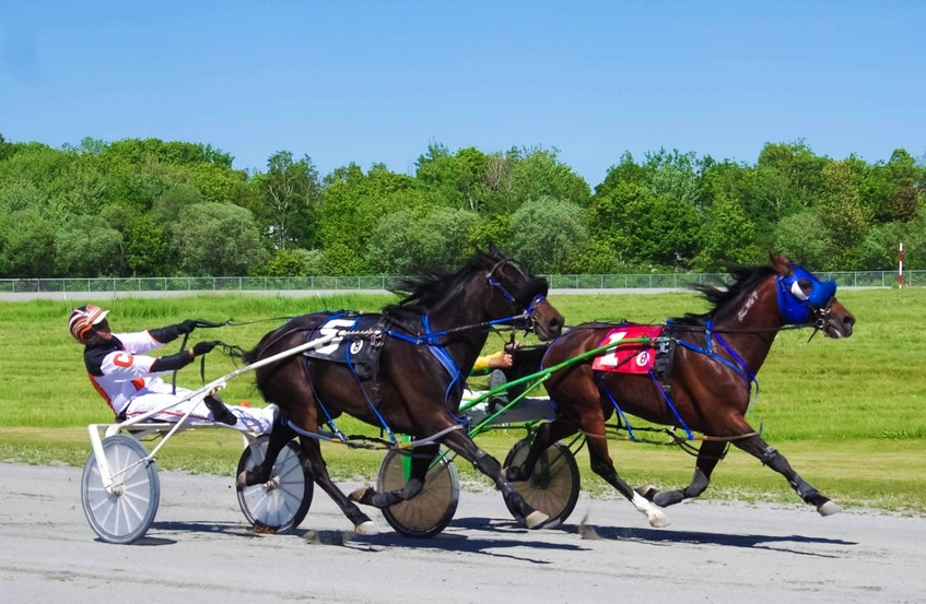 Accelerator, right, with driver Greg Sparling, fended off a late challenge from Johnnie Jack and driver Ryan Campbell to win in 1:59.1 last Saturday afternoon at Northside Downs. Harness racing continues on today at 1 p.m. CONTRIBUTED • TANYA ROMEO - Contributed