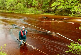 For the last three years, Cape Breton Highlands National Park resource conservation specialists like Sarah Penney, seen here, have been collecting juvenile salmon in the spring for adult rearing at the Aquatron. PARKS CANADA