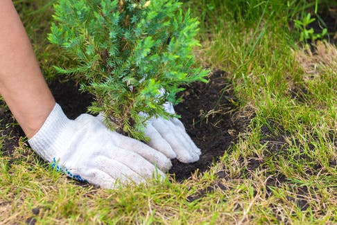HRM workers will soon visit neighbourhoods noting any dead or damaged street trees.