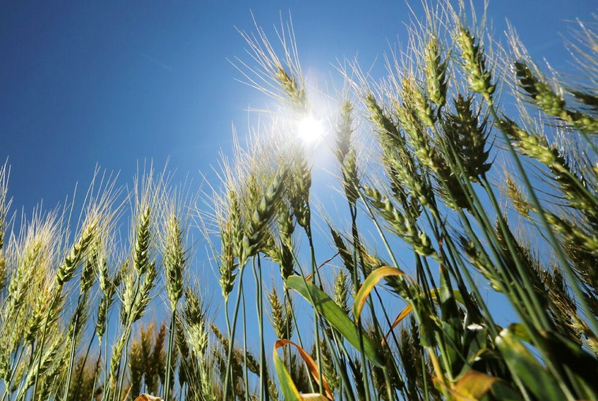 Agriculture is perhaps the one industry in which Canada will have obvious comparative advantages in the future.