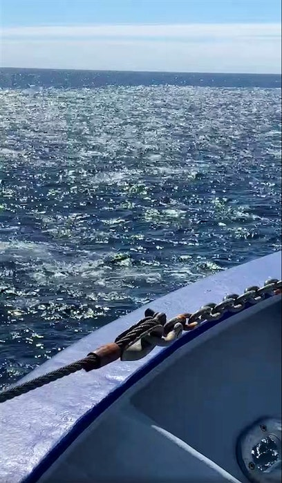 Jason Branton of Winterton says the seal herd they steamed through on May 30 was about five miles wide. The animals were all around, and under, the boat, he said. - Screenshot