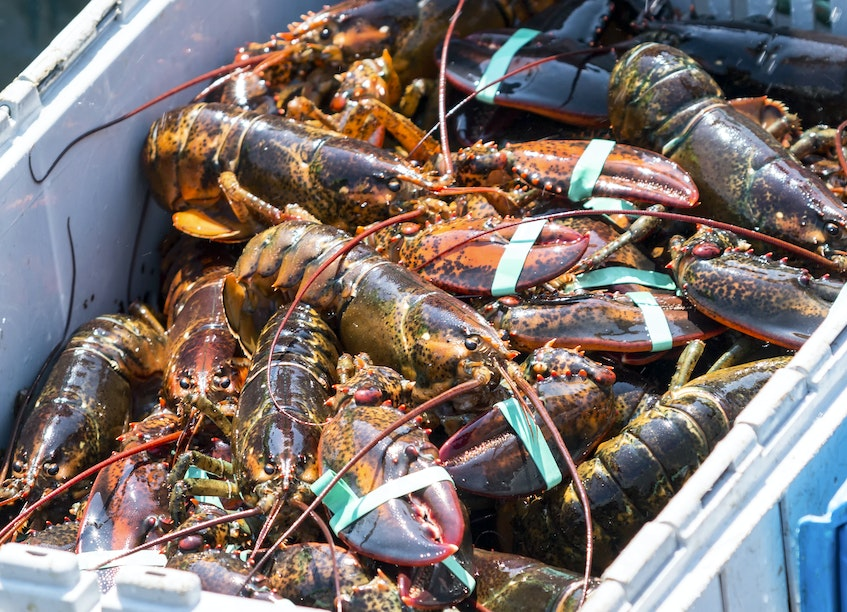 Rodger Cameron believes Atlantic lobsters taste the best during the summer because the lobsters caught from May to September have the highest blood protein levels possible before molting. - RF Stock