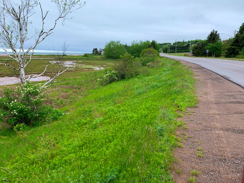 This section along Keppoch Road will be part of the 2.35-kilometre-long and three-metre-wide asphalt Keppoch Road multi-purpose path. - Terrence McEachern