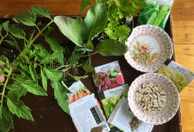 Seeds of all shapes and sizes — the seed packages are your guide for whether to direct seed or plant out seedlings. CONTRIBUTED