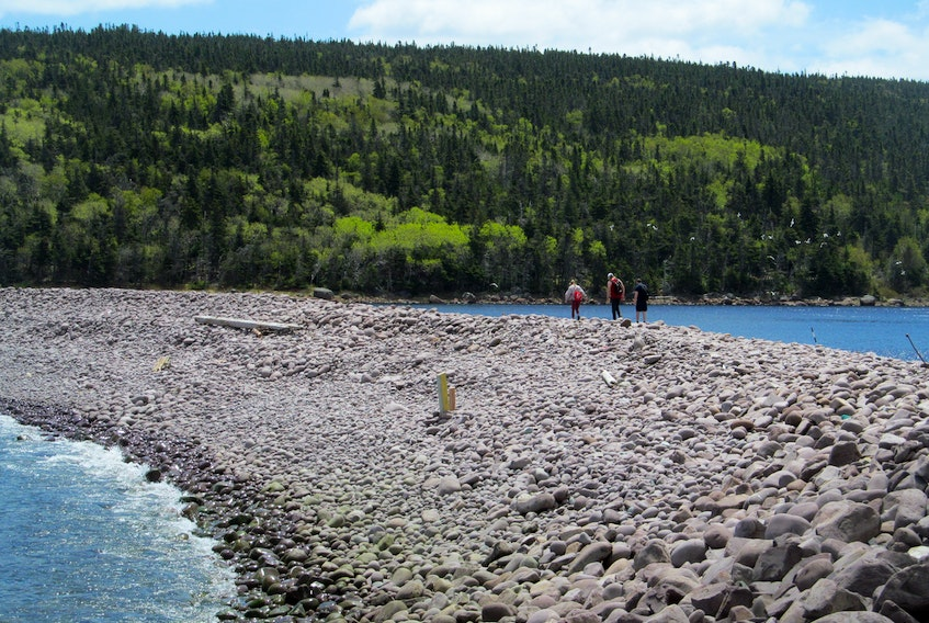 With warmer weather arriving in Newfoundland's Avalon Peninsula, many folks have been out hiking in our beautiful natural environment. Janny VanHouwelingen of St. John's sent this photo of hikers on the Freshwater Bay Barachois, on Deadman's Bay path between Blackhead and Fort Amherst, an 11-km distance with almost continuous ocean views.