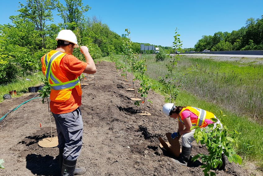 The Highway of Heroes Tree Campaign was successfully launched more than seven years ago by volunteers with an interest in honouring people who died in wars and giving the environment a lift at the same time.