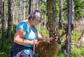 """""""The park's beautiful and the animals look really well cared for. It's very inviting,"""" said Donna Andrus, who was camping at Mira Provincial Park with her husband this weekend but came up to visit Two Rivers Wildlife Park."""