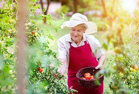 Gardening is a great way to get in touch with nature and stay active. - Storyblocks Photo.