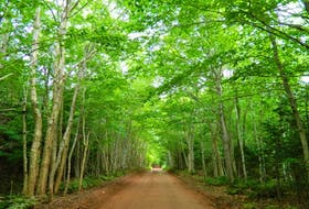 New Harmony Heritage Road in Prince Edward Island features an enclosed canopy forest stretching just over a kilometre. It's part of the Designated Scenic Heritage Roads on the Island. - Tourism PEI photo