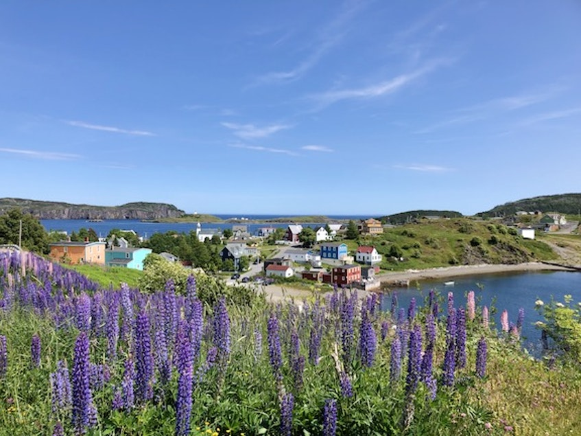 The historic town of Trinity, on the Bonavista Peninsula, is one of the most popular destinations for travelers to Newfoundland and Labrador. - Barb Dean-Simmons