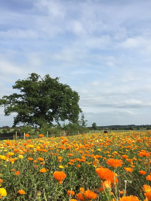 """""""I like to garden, I like to weed; I like to do simple things, but still be outside,"""" says Robyn King, who says the organic flower farm she worked at during her first World Wide Opportunities on Organic Farms posting was ideal for her."""