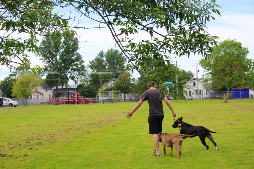 Daniel Cantin started up Gibson's Legacy in summer 2020, in memory of his old dog. Now, he's looking to register his rescue as a non-profit organization to be able to help more dogs in need. - Kristin Gardiner