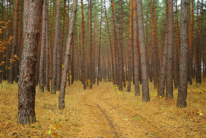 Nova Scotia is implementing a series of guidelines on how to manage its Crown land forests.