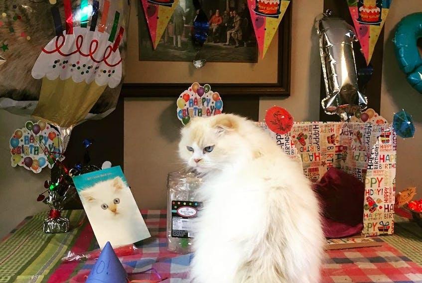 Alana Doré was devastated when her beloved cat Morty's health suddenly declined.