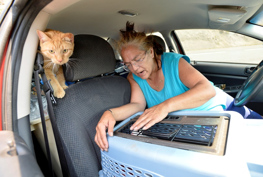 Martha Van Dyke, of Lytton, B.C., sits in her car with her cats, Tigger and Kona on Thursday, July 1, 2021, after a wildfire that raged through her town forced residents to evacuate. - Jennifer Gauthier / Reuters
