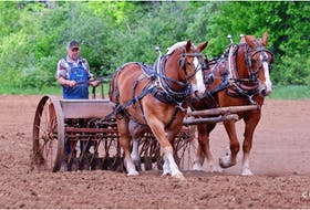 Phil Vogler meets some very interesting people. Case in point, Bobby Daniels. Earlier in the season, Bobby could be seen working the land with his majestic horses along the 360 to Harbourville, N.S.  That's a sight that brings back fond memories for many.  Thanks, gentlemen.