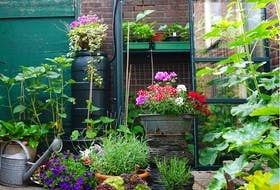 Smaller vegetables can be grown in containers.