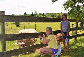 Rhea Stewart (left), Madelaine Rooney and Aubrey Stewart visit with a sheep while visiting the property around Mabel Murple's Book Shoppe and Dreamery in River John July 18.