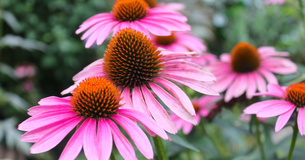 GET GROWING: Five plants for the mid-summer garden   Saltwire