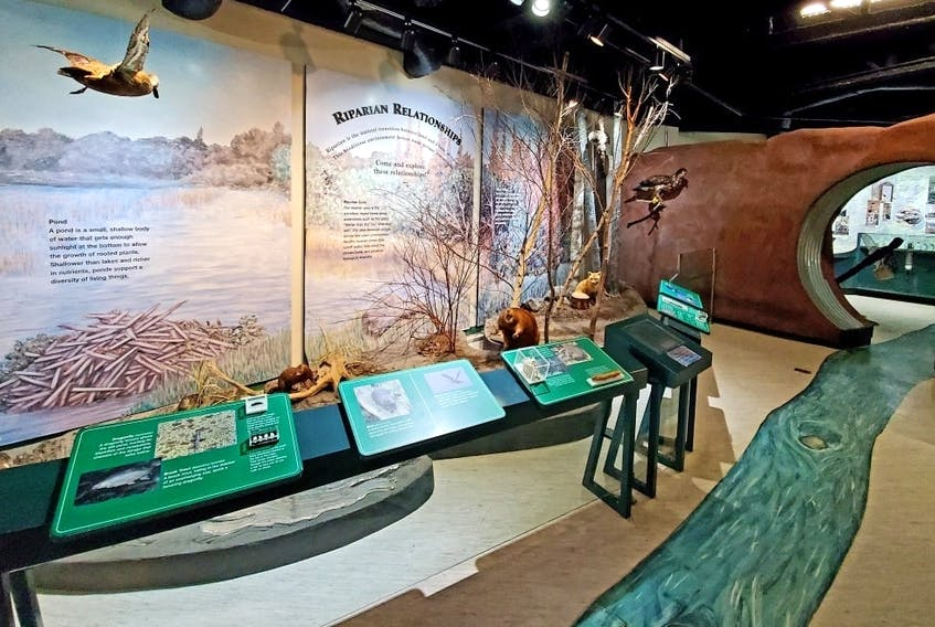 Rennie's River has a life of its own and stories to tell about how water has shaped the land, city, and history of St. John's. The Fluvarium allows visitors to watch trout swimming down the river; check out aquariums full of eels, frogs, and other freshwater creatures; and participate in interactive activities in a natural venue.