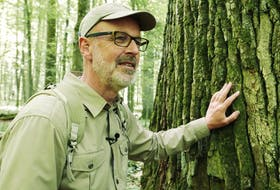Peter Wohlleben is no tree hugger, though he doesn't mind getting close.