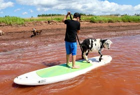 Seven-year-old Michael Barker gives paddleboarding a try in Egmont Bay, P.E.I., while a goat named Wreck hitches a ride. Wreck is one of the flock of Beach Goats, which brings in visitors from across Atlantic Canada who want to paddleboard or do yoga with the goats. - Helen Earley