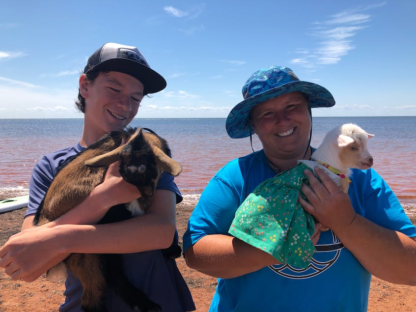 Devon and Keegan Saila of Beach Goats cuddle some of the goats in their flock. - Helen Earley - Saltwire network