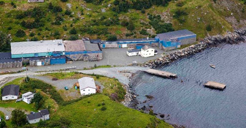 A company from St. John's hopes to use the former groundfish plant in Tors Cove to process seal oil and meat into omega-3 oils and nutraceuticals for for the food industry - File Photo