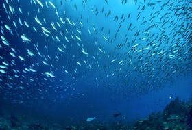 A school of fish swim through waters in Indonesia. - Tom Fisk