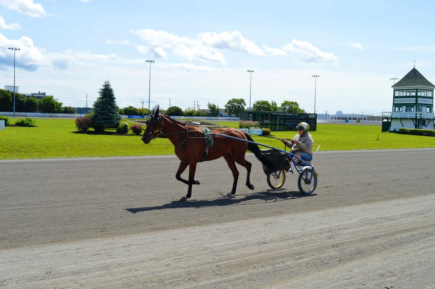 A harness racing driver jogs a horse around the track at Red Shores at the Charlottetown Driving Park on July 28. The Guardian Gold Cup and Saucer Race takes place on Aug. 21.   - Dave Stewart • The Guardian