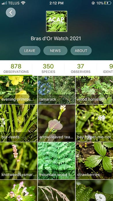 A screenshot from the iNaturalist app, where participants in the bioblitz can upload pictures and recordings of species they observe in Cape Breton. CONTRIBUTED