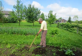 Mark Cullen takes aim at some of the weeds that have taken hold in his garden.